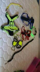 Range of dog accessories