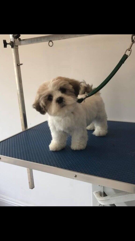 Puppy for sale 6months old