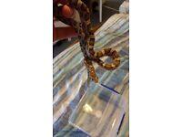 Anerythristic Corn Snake and Vivarium - Together or separately