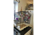 4 budgies and cage for sale
