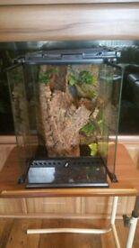 Medium size Spider tank