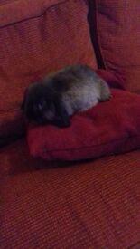 Babbie mini loop rabbit