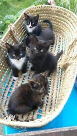 5 beautiful healthy kittens. £50-90