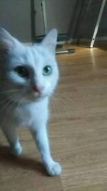 Adult female cat