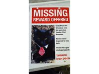 Missing back cat wearing green collar desperate to have him home