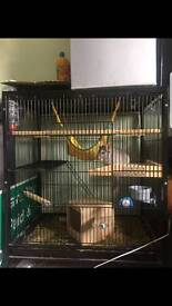 Chinchilla and large cage