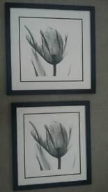 High Contrast Tulip