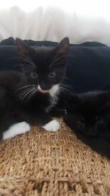 2 kittens best friends
