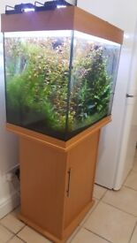 Fish tank with accesories and fish