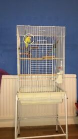 Bird cage with stander and budgie bird