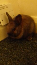 litter of 4 baby rabbits (kits) updated down to sold.