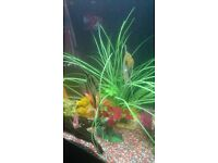 5 large angel fish 15 pound each