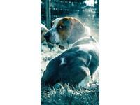 Grand Paws Evening And Weekend Door to Door Dog walker