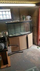 4ft bowed fish tank