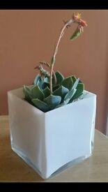 70+ Glass vase, centrepiece or candle holder