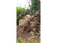 TREE STUMPS GRINDING REMOVED HEDGES NEW GARDEN FIELD FENCING SUPPLIED FIXED DIGGER & DUMPER HIRE