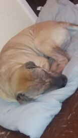 Sadly i have to rehome my beautiful male Shar Pei due to change of circumstance