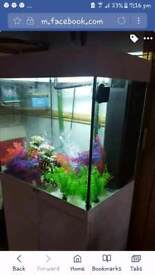 white jewel fish tank ready to go