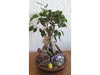 Bonsai tree-mini garden