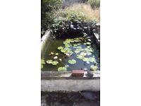 Koi pond set up inc fish.