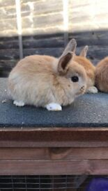 6 beautiful bunnies looking for a warm home this winter - Cardiff
