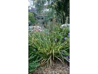 Free Ornamental grass