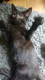 Kitten looking for a forever loving home