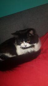 3/4 Persian cat
