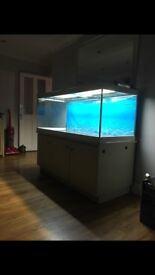 Full tropical tank set up.