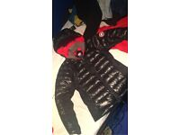 Canada goose for sale