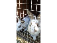 GORGEOUS & FRIENDLY Rabbits For Sale