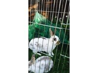 Rabbit looking New home