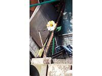 Cast iron garden flower