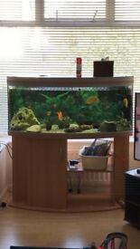 Tropical Fish Tank (aquarium) with fish