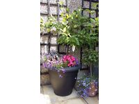 The BIG Plant Pot Sale due to relocation abroad, includes lovely apple tree and much much more