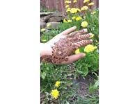Bradford henna/Mehndi/tattoo artist