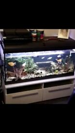 3.5 ft fish tank full set up quick sale as have new tank