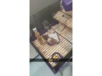 Syrian hamster with cage/wheel/water bottle