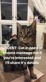 Tabby Cat Free