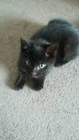 Looking to rehome my kitten