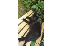Two loving female cats for rehoming