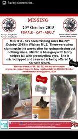 Still missing, All grey female cat. Wishaw