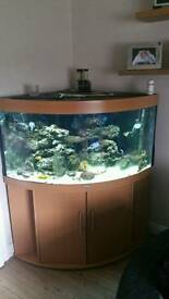 Jewel trigon 360 fish tank