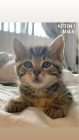 BEAUTIFUL kittens ready for a new home