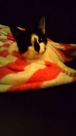 Female cat for adoption
