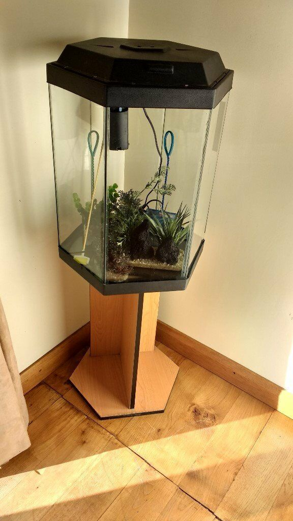 Hexagonal fish tank with fluval 2 filter heater a couple for Hexagon fish tank