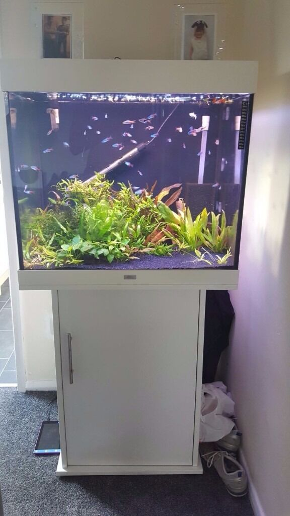 juwel lido 200 fish tank in huthwaite nottinghamshire gumtree. Black Bedroom Furniture Sets. Home Design Ideas
