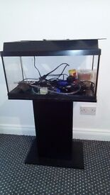 Two fish tanks and a stand with all Equipment