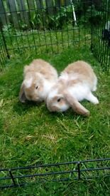 Two rabbits for sale!