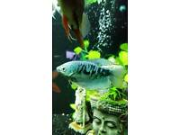 7 tropical fish
